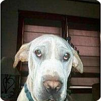 Adopt A Pet :: Sailor - Newport, VT