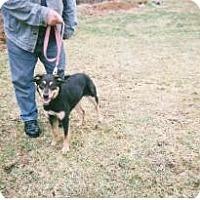Adopt A Pet :: Jessica - latrobe, PA