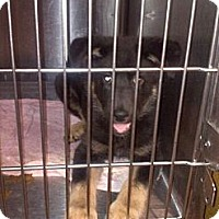 Adopt A Pet :: Luna - Hazard, KY