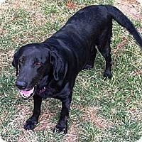 Adopt A Pet :: Big Bertha - Richmond, VA
