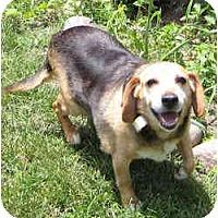 Adopt A Pet :: Joe - Novi, MI