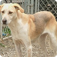 Adopt A Pet :: Samantha - Savannah, MO