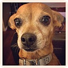 Adopt A Pet :: Nena