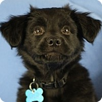 Adopt A Pet :: Truman - Minneapolis, MN