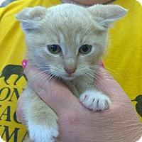 Adopt A Pet :: Bentley - Island Park, NY