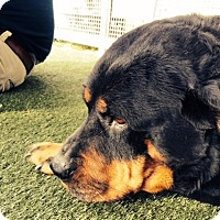 Adopt A Pet :: Nama - West Los Angeles, CA