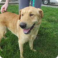 Adopt A Pet :: Lana - Lake Odessa, MI