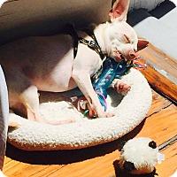 Adopt A Pet :: Romeo - Metairie, LA