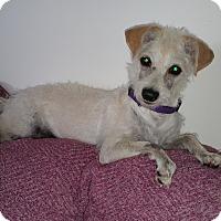 Adopt A Pet :: DayZee - Studio City, CA