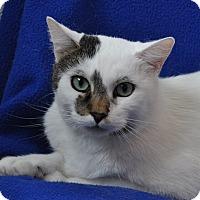Adopt A Pet :: Oscar - Gaithersburg, MD