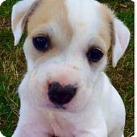 Adopt A Pet :: Elnora - Thompson's Station, TN