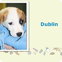 Adopt A Pet :: Dublin - Tampa, FL
