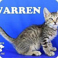 Adopt A Pet :: Warren - Carencro, LA