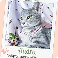 Domestic Shorthair Cat for adoption in Lincoln, Nebraska - AUDRA