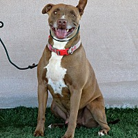 Adopt A Pet :: Mortiki - Palm Springs, CA