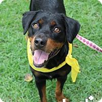 Adopt A Pet :: Jenn - Washington, DC