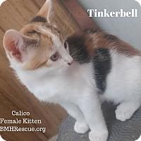 Adopt A Pet :: Tinkerbell - Temecula, CA
