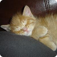Adopt A Pet :: Joey - Grayslake, IL