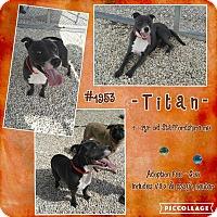 Adopt A Pet :: Titan - Concord, NC