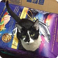 Adopt A Pet :: Ana - Baltimore, MD