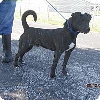 Adopt A Pet :: Koda - Mount Sterling, KY