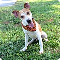 Adopt A Pet :: TUFF - Lexington, NC