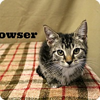Adopt A Pet :: Bowser - Melbourne, KY