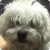 Adopt A Pet :: Milo - Aurora, CO