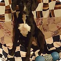 Adopt A Pet :: Annie - Albany, NC