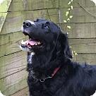 Adopt A Pet :: Adopted! Maddie