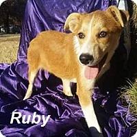 Adopt A Pet :: Ruby meet me 12/2 - Manchester, CT