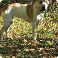 Adopt A Pet :: Hope - Union City, TN