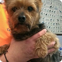 Adopt A Pet :: York - Aurora, IL