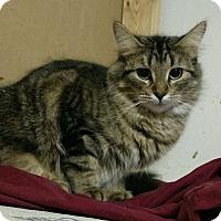 Adopt A Pet :: Target - Saginaw, MI