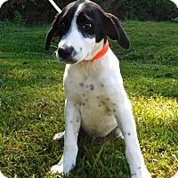 Adopt A Pet :: Bingo - St. Francisville, LA