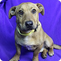 Adopt A Pet :: LOGAN - Westminster, CO