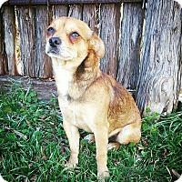 Adopt A Pet :: Wally - Fredericksburg, TX