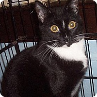 Adopt A Pet :: Dash - Lindenhurst, NY