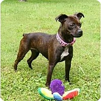 Adopt A Pet :: Twilla - Mocksville, NC