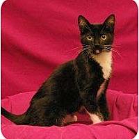Adopt A Pet :: Elton - Sacramento, CA