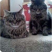 Adopt A Pet :: Maximuss + Diego - Sterling Hgts, MI