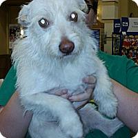 Adopt A Pet :: Porkchop - Phoenix, AZ