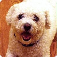 Adopt A Pet :: SOPHI - East Hanover, NJ