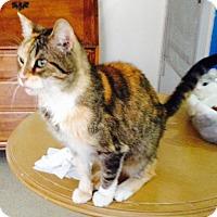 Adopt A Pet :: Irma - Colorado Springs, CO