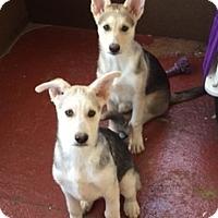 Adopt A Pet :: Thing One - Richmond, VA