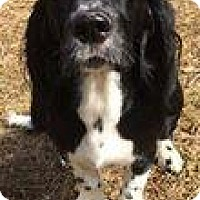 Adopt A Pet :: Lovely Layla - Marlton, NJ