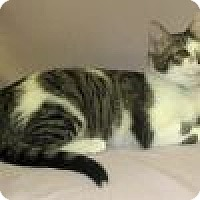 Adopt A Pet :: Marsha - Powell, OH