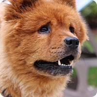 Adopt A Pet :: Lucy - Tucker, GA