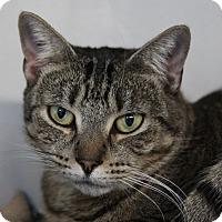 Adopt A Pet :: Cassie - Sarasota, FL