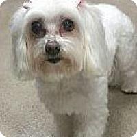 Adopt A Pet :: GIA - San Dimas, CA